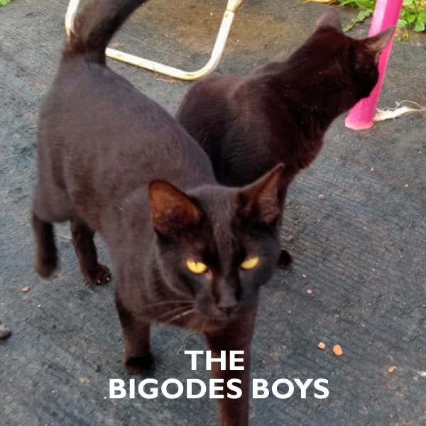 Cats for Adoption: the Boys from Tavira