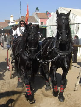 Carriage and pair of Lusitanos