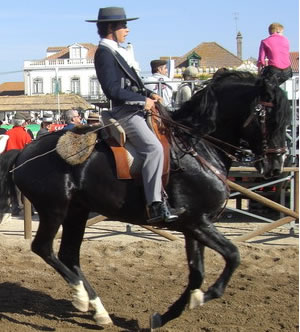 Another beautiful black Lusitano