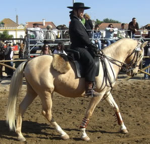 Palomino with a lady wearing culottes
