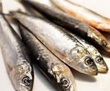 sardinesBunch