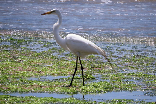 COMPANY FINED FOR THE SECOND TIME FOR NON-COMPLIANCE AT RIA FORMOSA