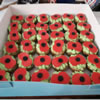 Sue Salisbury-Howe made Poppy Cupcakes for everyone