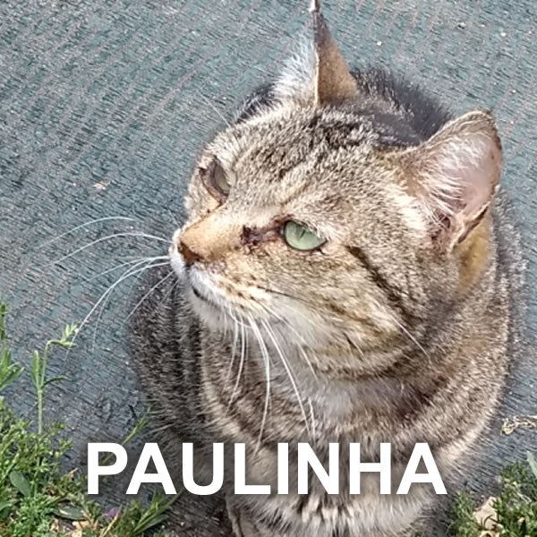Paulinha: rescued from the rubbish