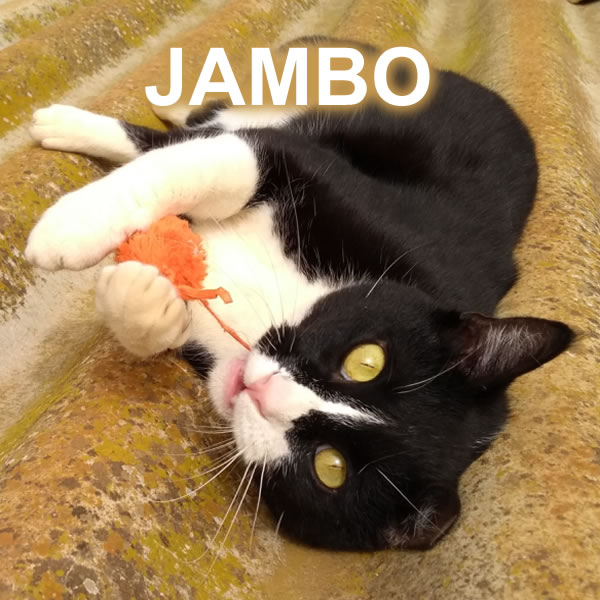JAMBO IS LOOKING FOR A NEW JOB