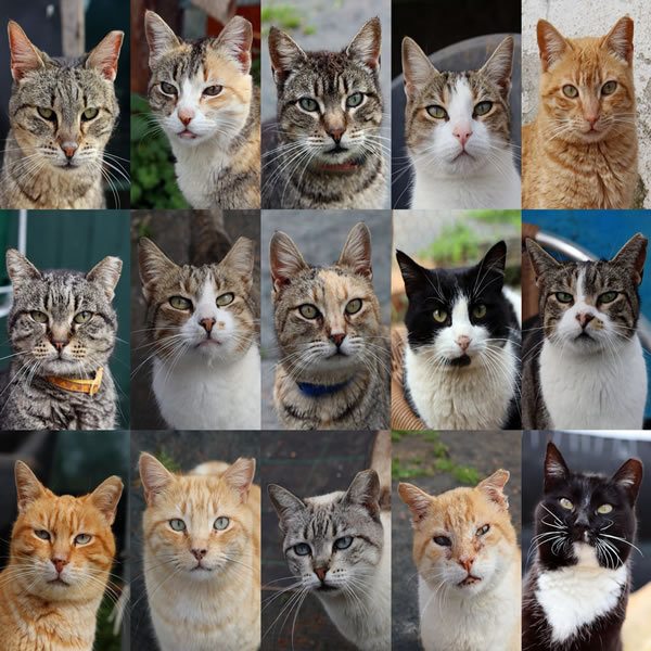 In the Cat House #1: Diary of an Animal Charity Volunteer, Aged 68½.